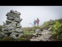 In the Wild with Levity | Lumina