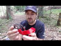 Scie à main - Tronçonneuse manuelle Nordic Pocket Saw